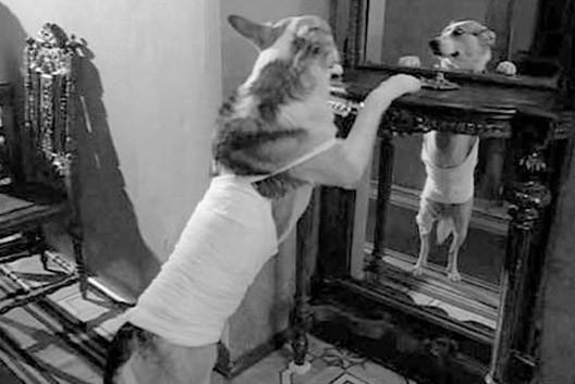 собачье сердце 6 глава Фильм Собачье сердце - смотреть онлайн бесплатно и.
